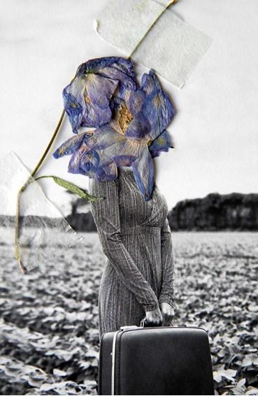 , Clau Cebrian, Dried Flowers I, 2021, 49326