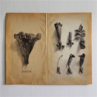 , Morteza Pourhosseini, Trumpet Vine, 2020, 25214