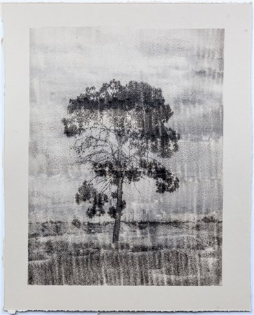 Photography, Sasan Abri, Untitled, 2019, 21468