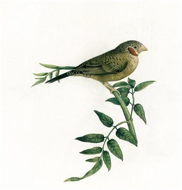 , Mohammad Ghaffari, Bird, 1902, 6617