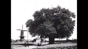 , David Claerbout, Ruurlo, Bocurloscheweg, 1997, 47227