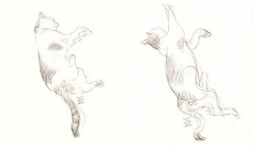 Drawing, Hossein Shirahmadi, Sleeping Cat, 2019, 38231