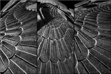 , Bijan Seyfouri, Wings, 2014, 12824