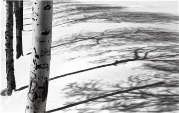 , Abbas Kiarostami, Snow No.47, 2002, 29870