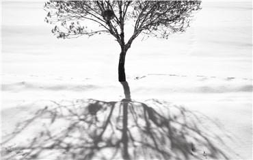 , Abbas Kiarostami, Snow No.2, 2002, 29868