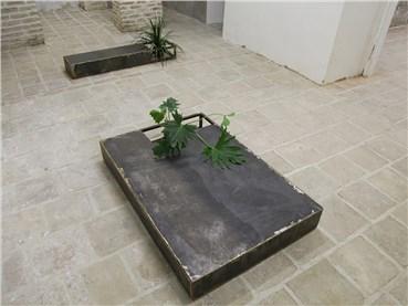 , Hamed Dehqan, Plant-Place, 2019, 34030