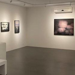 Nian Gallery